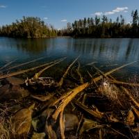 Underwater Trees, Judd Lake